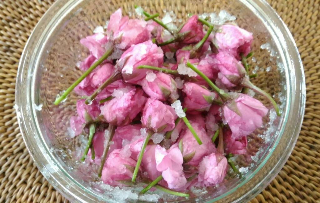 薬膳「桜塩漬け」