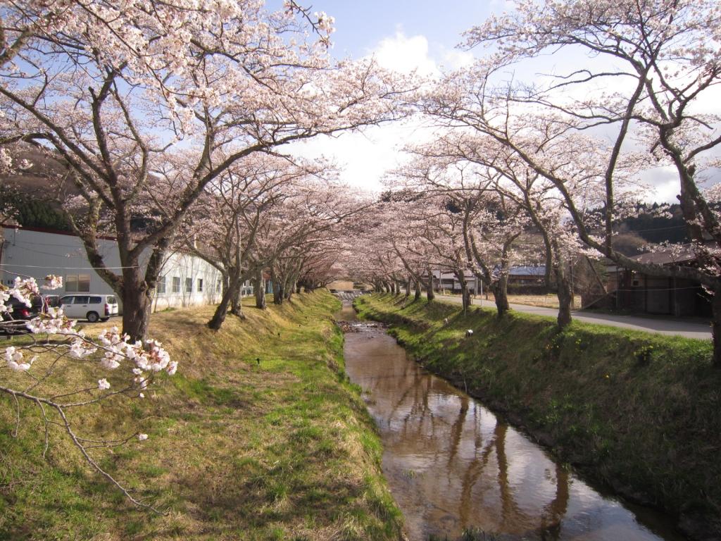 4月16日の桜1