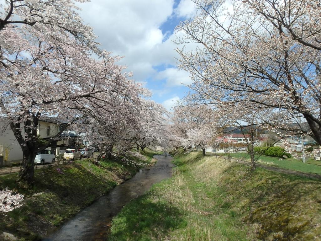 令和2年4月23日桜1