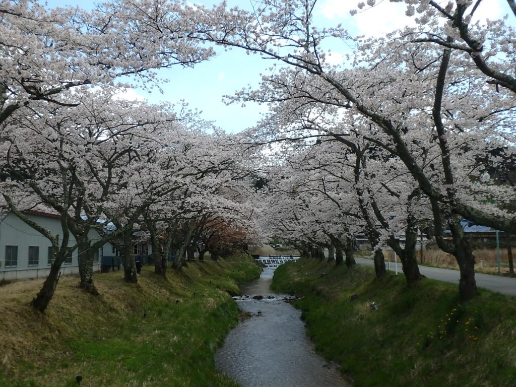 令和2年4月23日桜2