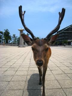 鹿に襲われる