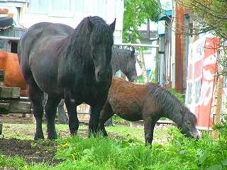 事務所の近所にいる親子馬です。可愛いですよ