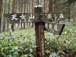 美しの森〜天女山