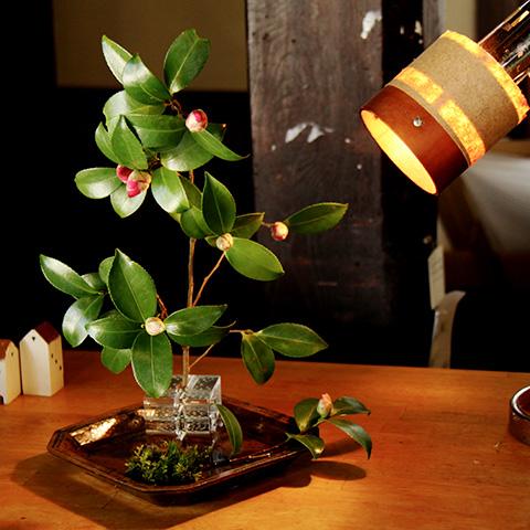 サザンカのつぼみを一輪挿し花器に挿して観賞。