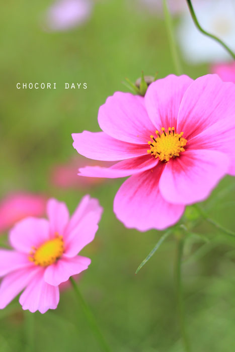 flower_pink027.jpg