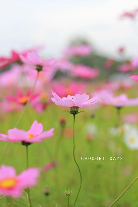 flower_pink028.jpg