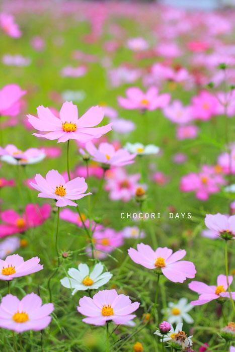 flower_pink029.jpg