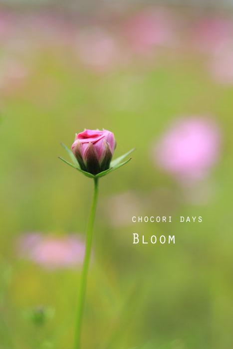 flower_pink030.jpg