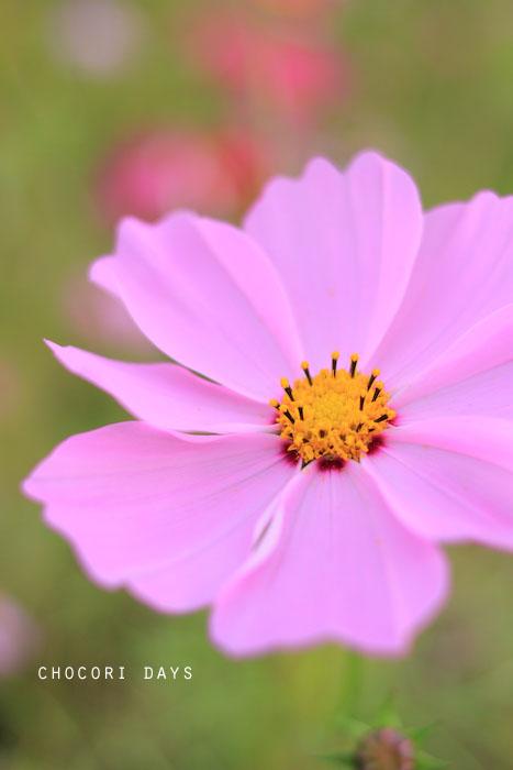 flower_pink031.jpg