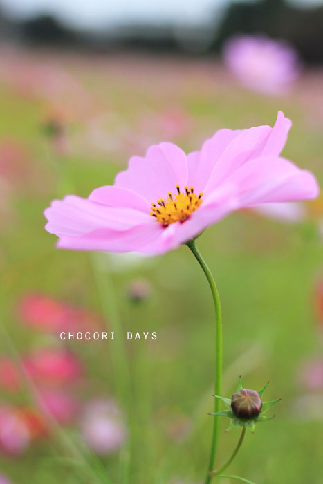 flower_pink032.jpg