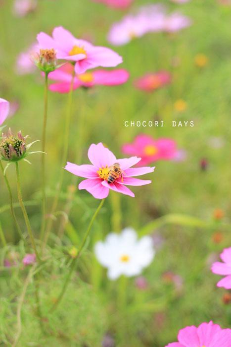 flower_pink033.jpg