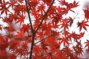 2009年 南禅寺の紅葉
