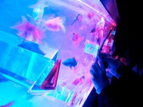 Art aquarium アートアクアリウム大丸ミュージアムKYOTO