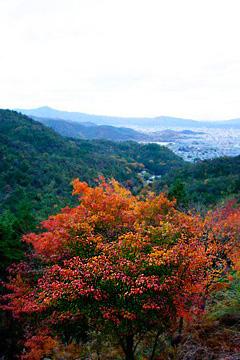 嵐山高雄パークウェイの紅葉