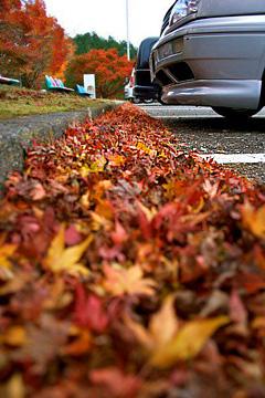 嵐山高雄パークウェイの紅葉とVWゴルフ3