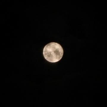 満月(アップ)