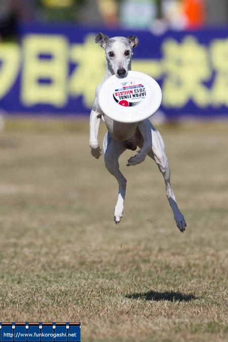 JFA 2013 ジャパンファイナル 新潟県大会