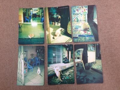 ハノイの猫ポストカード01