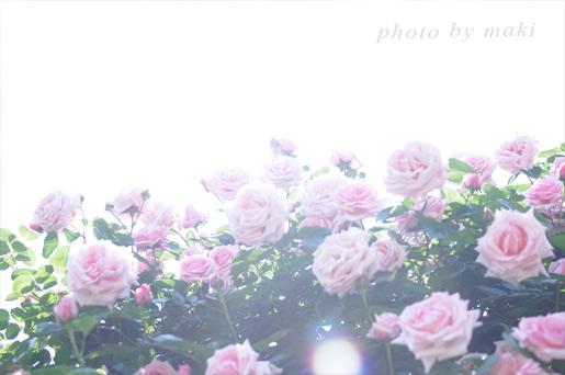 20170520-PhotoCafeAfter】とっておきのローズガーデン撮影会-9