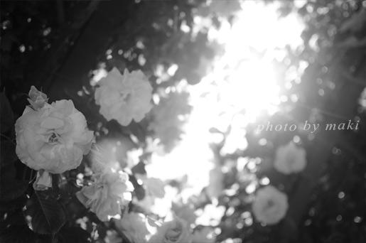 20170520-PhotoCafeAfter】とっておきのローズガーデン撮影会-11