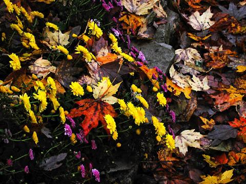 autumnleaf