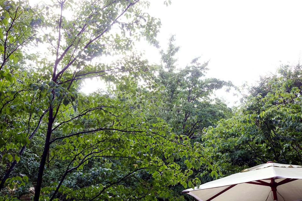 709雨あがり1.jpg