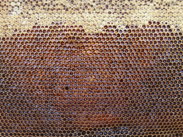 蜂の巣アップ.jpg