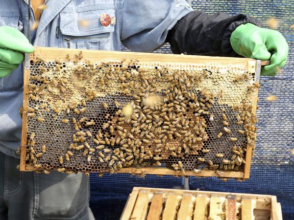 蜂の巣アップ前.jpg