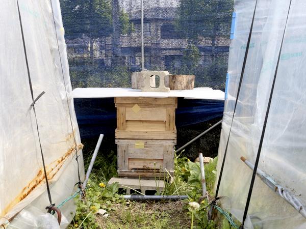 蜂の巣ひき.jpg