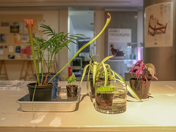 食採用植物.jpg