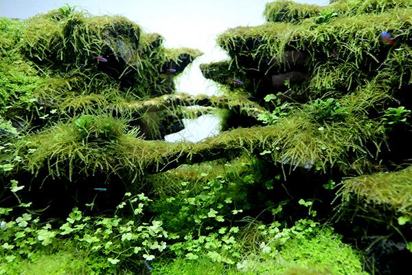 水景.jpg