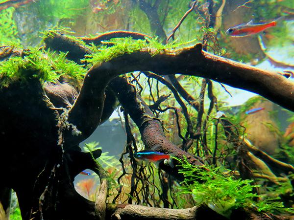 魚3匹.jpg