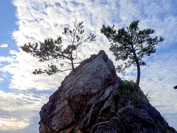岩上木.jpg
