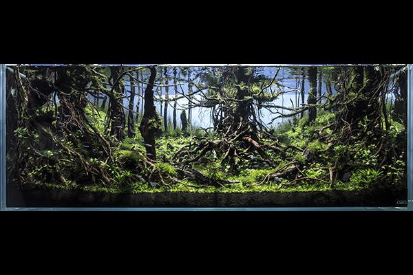 原始の森.jpg