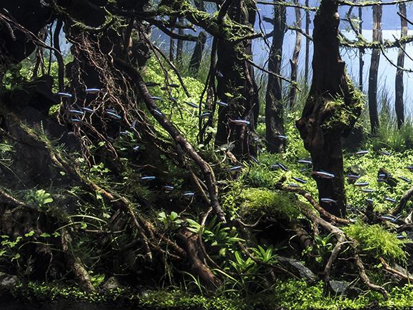 大樹の森.jpg