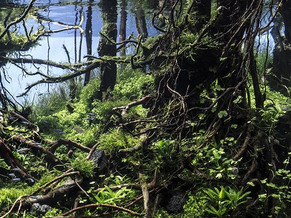 大樹の森2.jpg