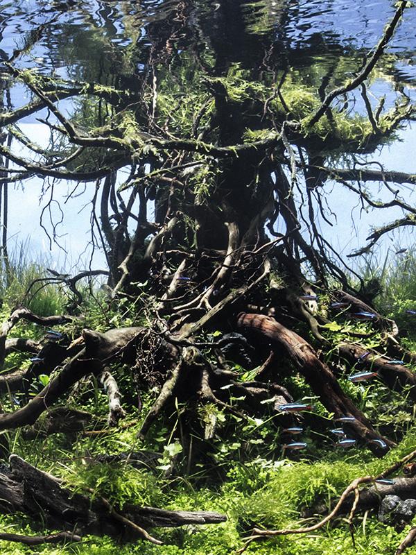 大樹の森3.jpg