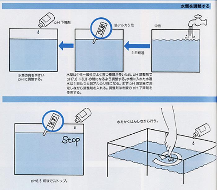 20110204_790703.jpg