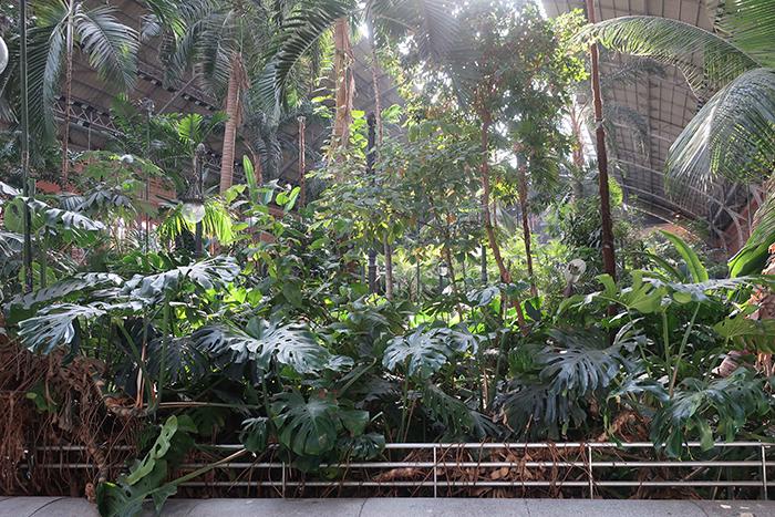 植物横から.jpg