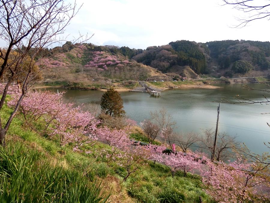 春の佐久間ダム