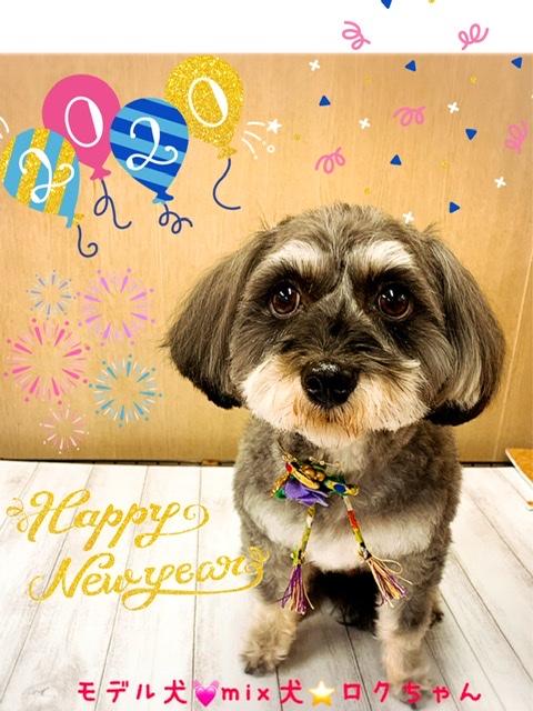 トイプードル ミニチュアシュナウザーのミックス犬の画像