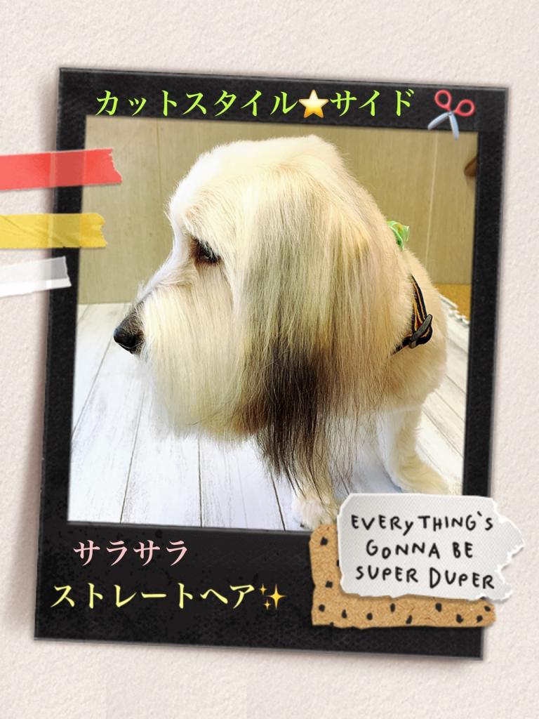 ミックス犬 ラボ君の横顔の画像