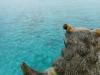 シーサーと海