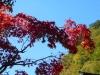 青空と赤紅葉
