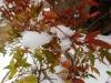 雪中紅葉南天