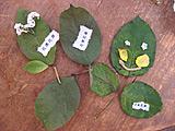 葉っぱで作品作り