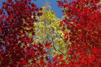 環境楽園 紅葉