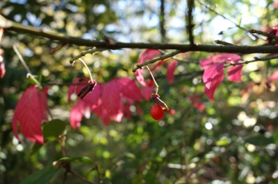 河川環境楽園 紅葉