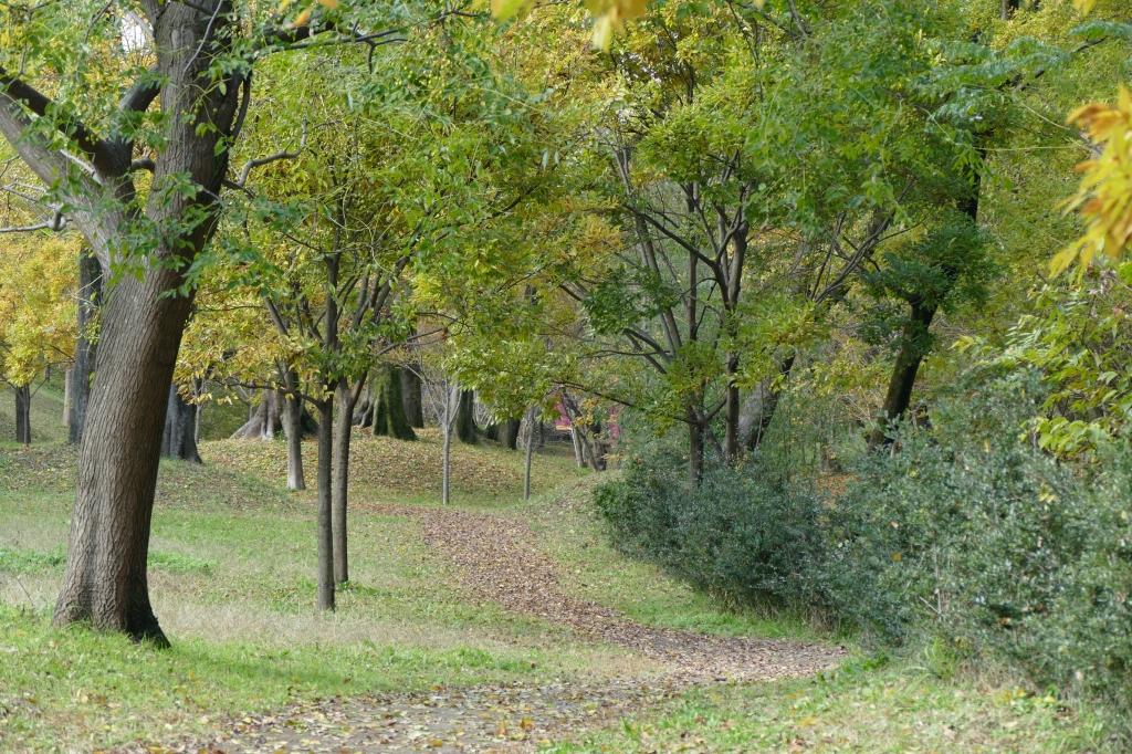 河跡湖公園