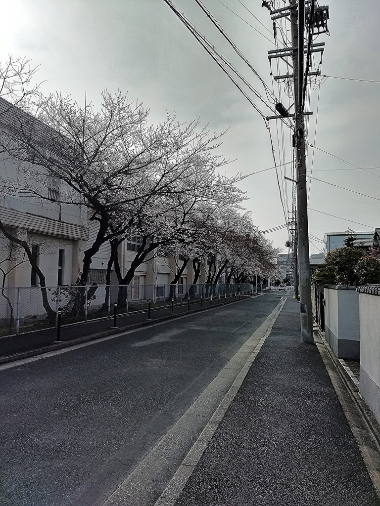 ちいさな自転車家 桜 繁忙期 ミニベロ 小径車